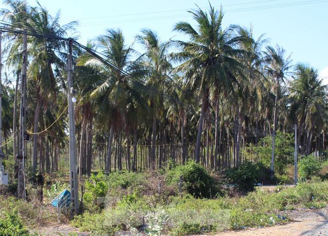 Khánh Hòa: Xôn xao doanh nghiệp sử dụng hàng trăm ha đất công không thuế gần 2 thập kỷ - Ảnh 3.