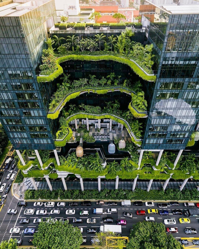 Vườn thẳng đứng phủ mát Singapore, Việt Nam thì sao? - Ảnh 3.